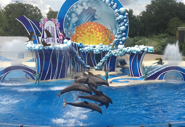 blue-horizons-seaworld-dolphin