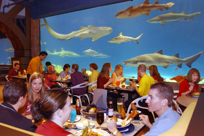 SeaWorld's Sharks Underwater Grill