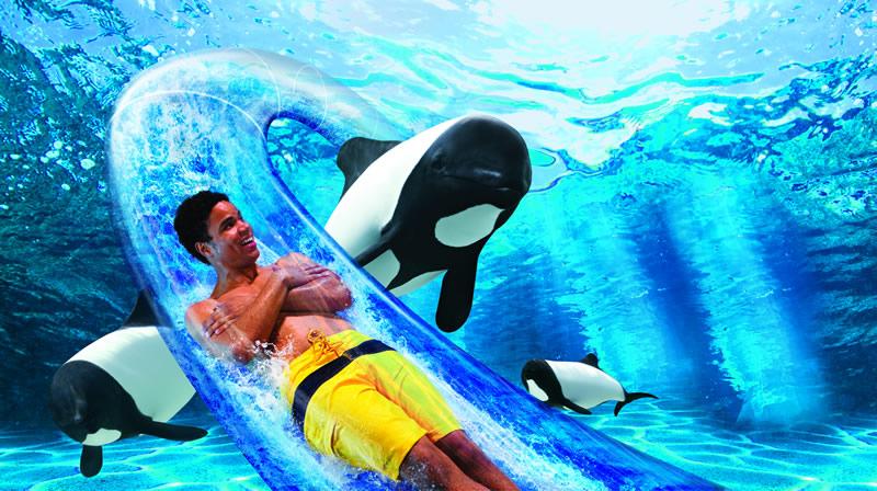 Dolphin Plunge