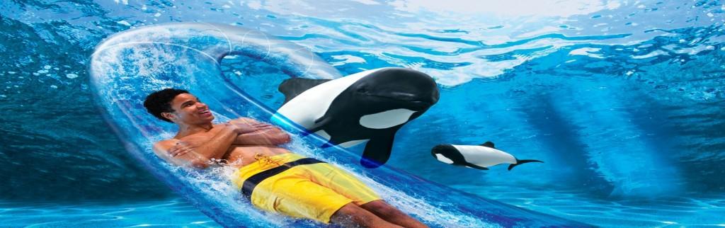 aquatica_dolphin_plunge_2dolphins_rgb-2-